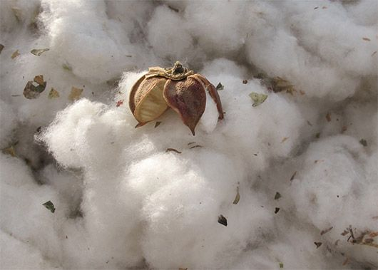 Making cotton production better for the people who produce it and for the environment.